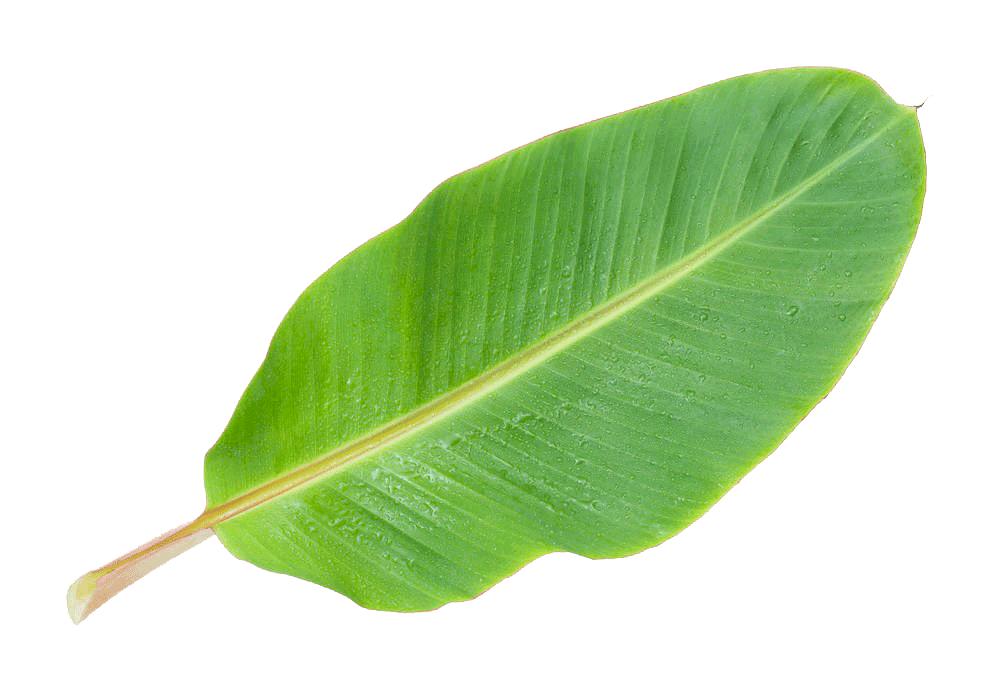 La llave verde