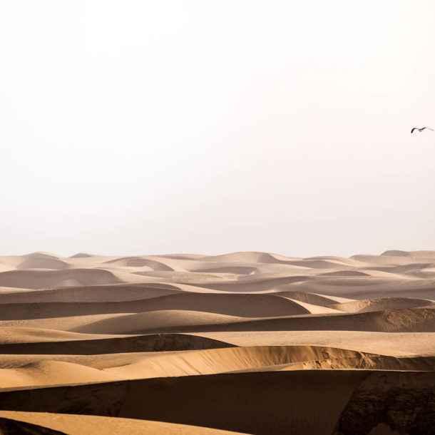 Du haut des dunes - 2h30