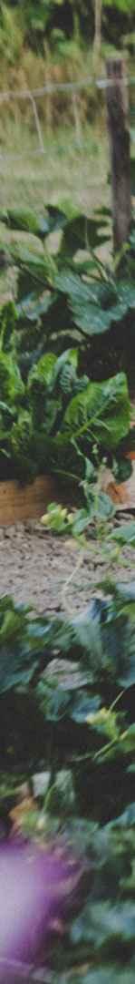 Bio-Gemüsegarten